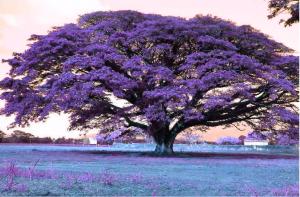 Cara Merubah Warna Pohon dengan HTML dan CSS3